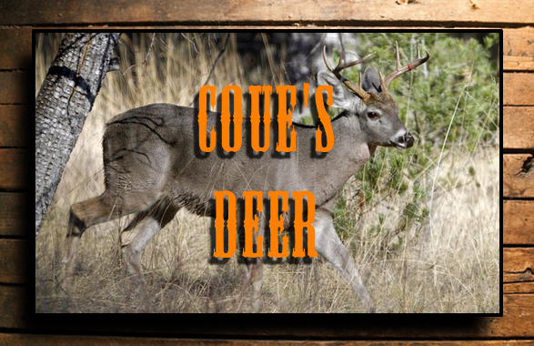 COUES DEER BUTTON
